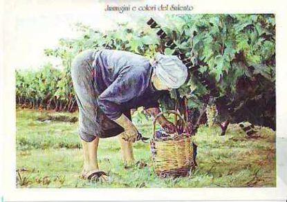 Immagine di CARTOLINA 12 X 17 QUADRO - TAGLIATRICE D`UVA
