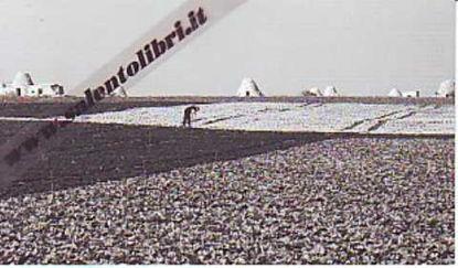 Immagine di CARTOLINA 10 X 17 SALENTO - PAESAGGIO ITALIANO