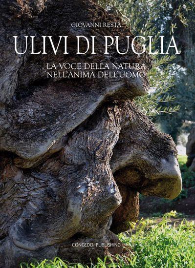 Immagine di Ulivi di Puglia